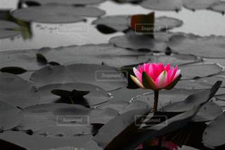 自然の写真・画像素材[384407]