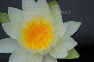 花の写真・画像素材[384414]