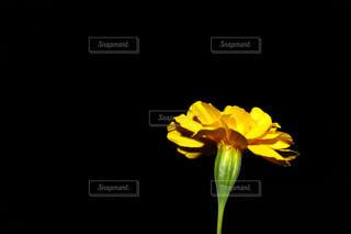 花の写真・画像素材[384453]