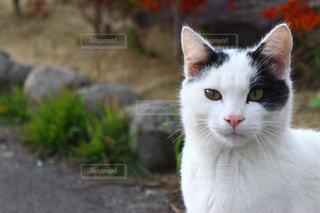 猫の写真・画像素材[384460]