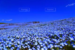 花畑の写真・画像素材[451042]