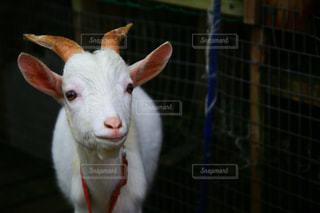 動物の写真・画像素材[672612]