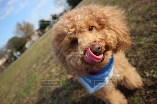 犬の写真・画像素材[302315]