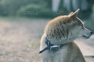 犬の写真・画像素材[9151]