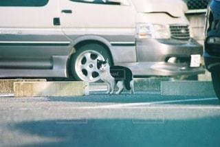 猫の写真・画像素材[9109]