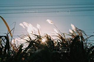 自然の写真・画像素材[9052]