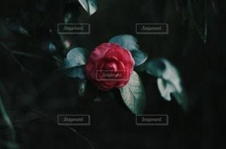 自然の写真・画像素材[8981]