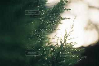 自然の写真・画像素材[282340]