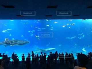 水族館の写真・画像素材[307535]
