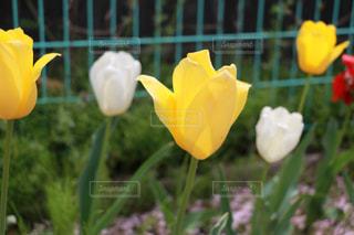 花の写真・画像素材[302950]