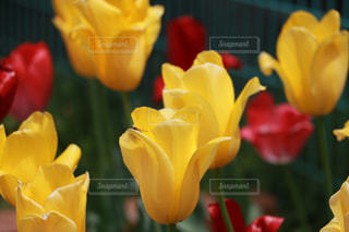 花の写真・画像素材[303011]