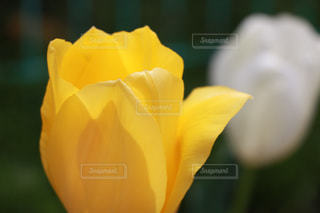 花の写真・画像素材[303013]