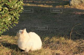猫の写真・画像素材[304259]