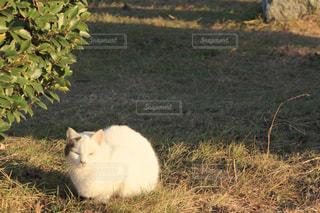 猫 - No.304260