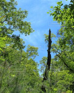 森の中の木の写真・画像素材[767308]