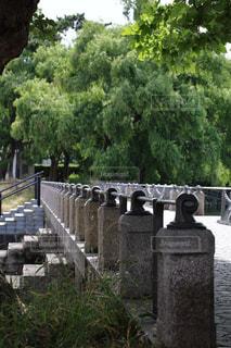石橋の写真・画像素材[801480]
