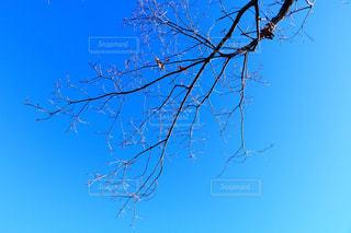 背景の青い空と木の写真・画像素材[913089]