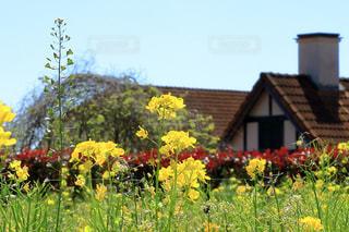 菜の花と洋風な建物 - No.983399