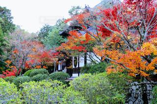 紅葉とお寺の写真・画像素材[1007517]
