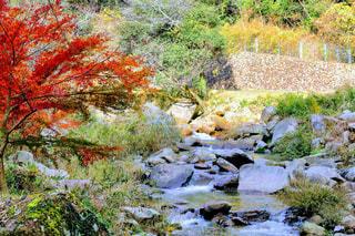 紅葉の渓谷の写真・画像素材[1007519]