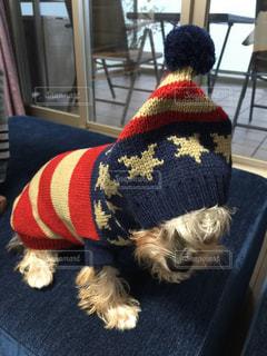 犬の写真・画像素材[303107]