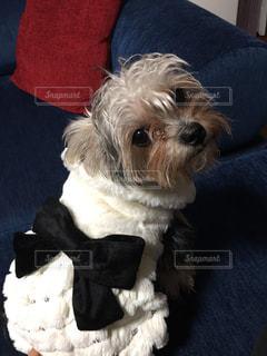 犬の写真・画像素材[303112]