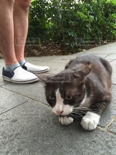 猫の写真・画像素材[304083]