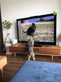 犬の写真・画像素材[549892]