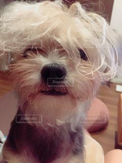 犬の写真・画像素材[562062]