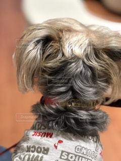 着ぐるみを着た犬の写真・画像素材[848700]