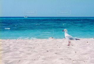海の写真・画像素材[333980]