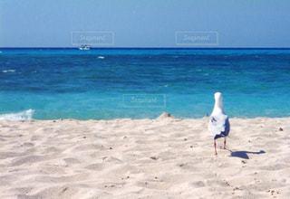 海の写真・画像素材[333990]