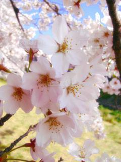 春の写真・画像素材[337895]