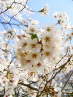 春の写真・画像素材[337898]
