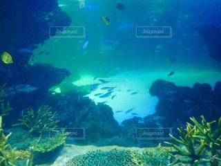 水族館の写真・画像素材[380296]