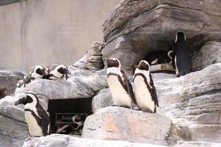 水族館の写真・画像素材[380299]