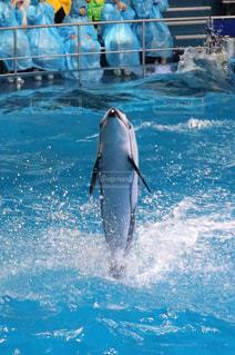イルカの写真・画像素材[380319]