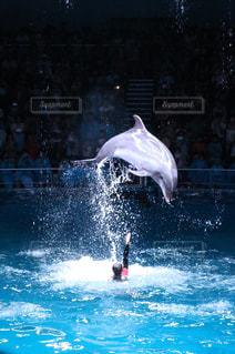 イルカの写真・画像素材[380322]
