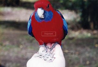 鳥の写真・画像素材[382367]