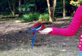 鳥の写真・画像素材[382370]