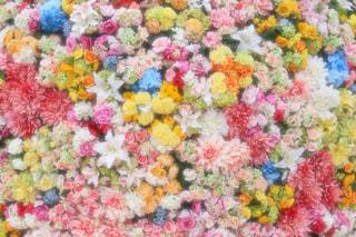 花の写真・画像素材[420628]