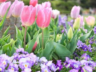 花の写真・画像素材[428238]