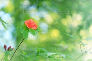 花の写真・画像素材[485095]