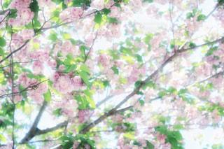 春の写真・画像素材[485434]