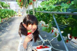 いくつかの料理を食べている女の子の写真・画像素材[739241]