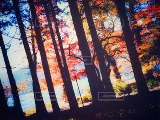 ウィンドウの前に木の写真・画像素材[789110]