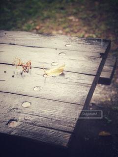 ベンチに座っている鳥 - No.817583