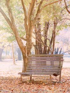 ツリーの横にある空の公園ベンチの写真・画像素材[858586]