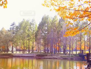 水の体の横にあるツリーの写真・画像素材[863489]