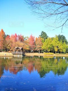 木々 に囲まれた水の大きな体の写真・画像素材[867065]